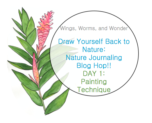 Join the Draw Yourself Back to Nature ecourse blog Hop fun! Click for watercolor and nature journaling tutorials!