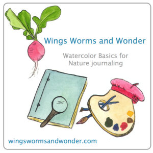 Check out this free video series of watercolor techniques for nature journalers! Click through to see more videos in the series.