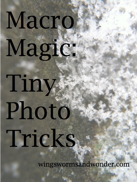 What's Macro photo anyway? Is it magic? Click through to learn all about it and get a few easy tricks for taking great macro shots in nature and beyond the Wings, Worms, and Wonder way!