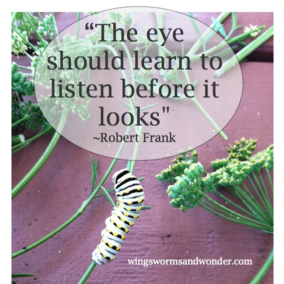How can you shift the way you use your senses to connect more deeply with nature and creativity? Click to Ponder this and more on the Wings Worms,and Wonder blog!