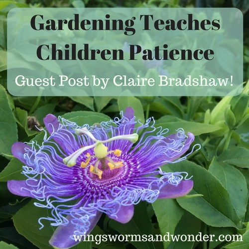 Patience, sometimes elusive, other times abundant! Click to learn more about cultivating it in children's lives through gardening in this guest post by Claire Bradshaw!