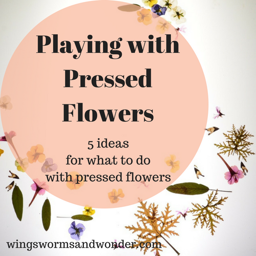 playing-with-pressed-flowers