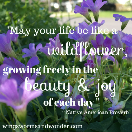 Connect with wildflowers every day! Take a little time to discover wildflowers in your area. Click here for wildflower nature journal ideas!