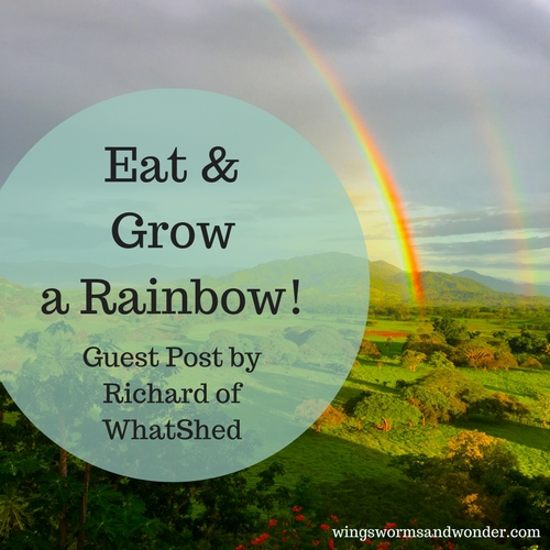 Grow and Eat a rainbow this summer! Click for veggie color fun and lots of ideas for creative nature connecting with Wings, Worms, and Wonder!