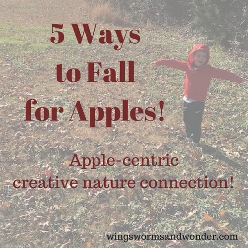 Fall is a great time to celebrate apples so Click for 5 ideas for fall apple centered creative nature connection fun with Wings, Worms, and Wonder!