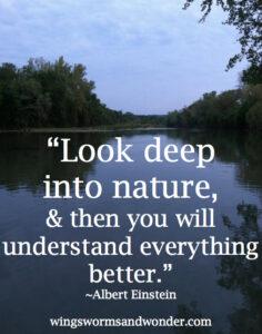 deep into nature
