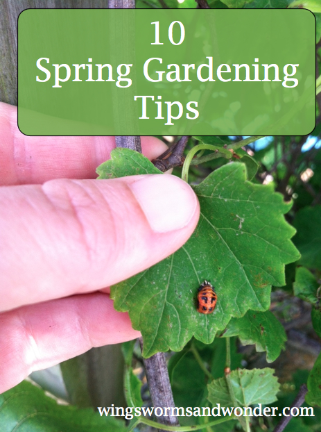 10 spring tips graphic