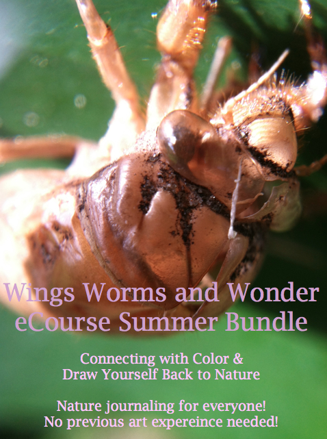 cicadea-bundle-graphic
