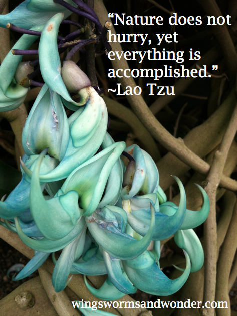 lao-quote-graphic