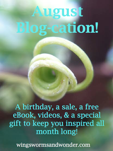 blog cation graphic