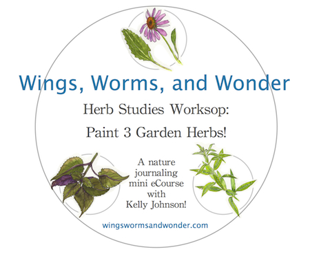 herb studies workshop logo graphic 450