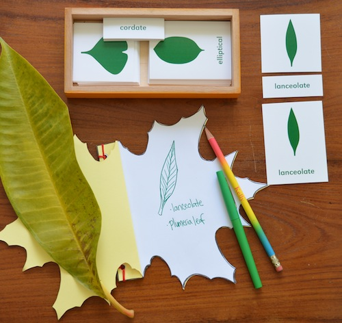 Wonder Wednesday 37, Wings, Worms , and Wonder leaf journal template pdf. Use this template to make your own leaf shaped nature journal! Click through to download the template and learn how!