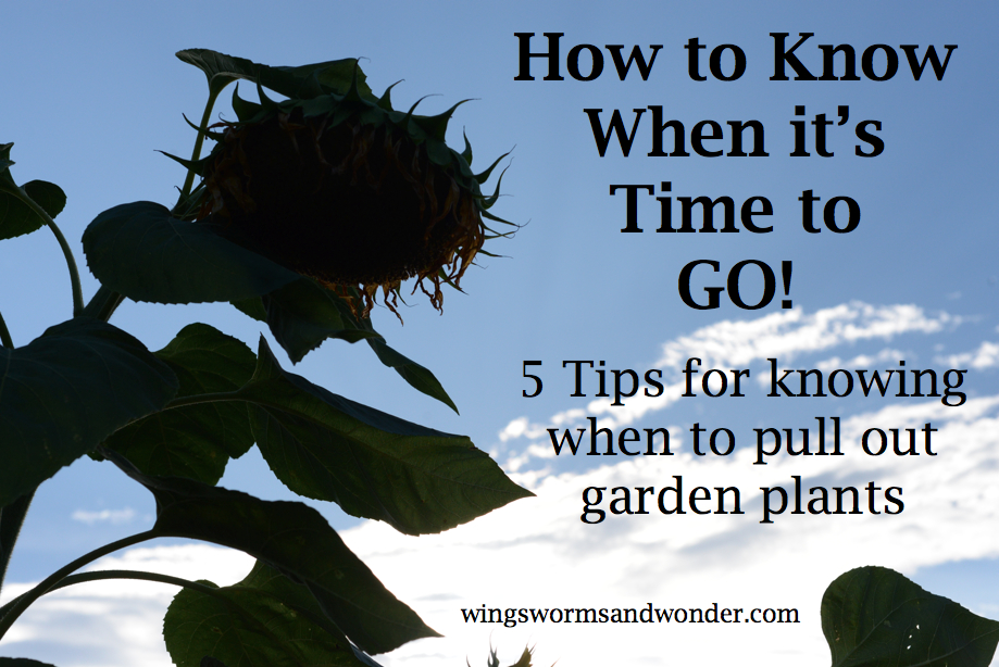 How do I know when it it's time to pull a plant out of the garden? I'll help you decide when it's time to say GOODBYE with these 5 tips. https://www.wingswormsandwonder.com/how-to-know-when-its-time-to-go-5-tips-for-pulling-garden-plants/