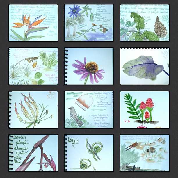 Check out these pics form kelly johnson's personal nature journals! Clcik through to learn more about nature journaling with her perosnally!