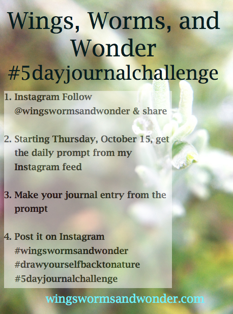 Join Draw Yourself Back to Nature! Click here for nature journal fun https://www.etsy.com/shop/WingsWormsAndWonder?section_id=15948954&ref=shopsection_leftnav_2