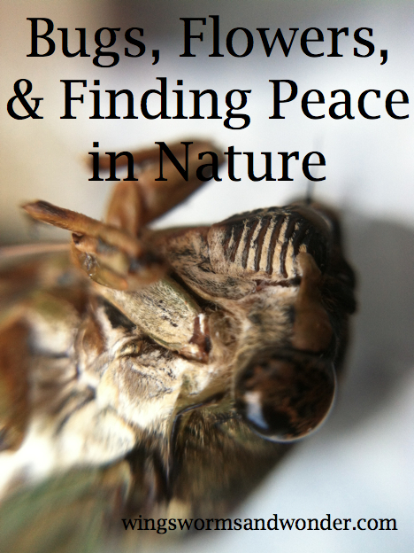 When life gets hectic or the world feels overwhelming, a little break in nature is just what we humans need. But what about when the stresses of life bear down and you simply can't get outside, click through and watch this slide show I created for you.