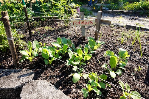Maintaining a family friendly garden! Click through to check out this Wings, Worms, and Wonder guest post by Kacey Mya of the drifter collective on family friendly gardening!