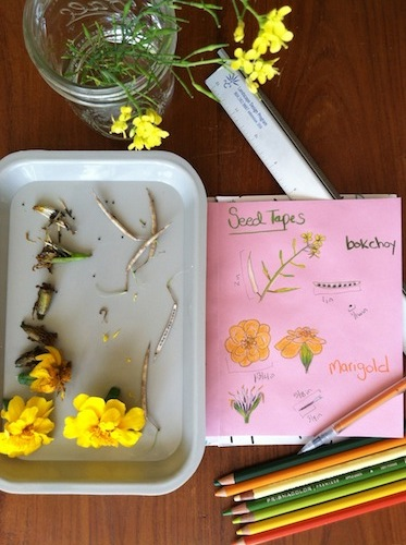 Combine nature journaling and gardening in this fun Wonder Wednesday seed strip activity! Click through to get the full instructions, free from Wings, Worms, and Wonder!