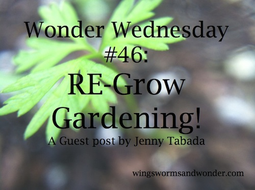 This Wonder Wednesday, I offer you the easiest gardening around, re-grow gardening! It's great to do at home, school, or in summer camp!