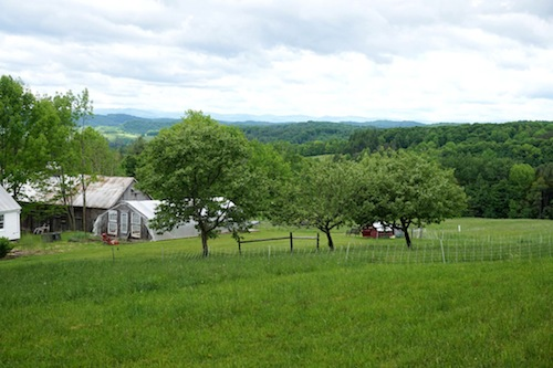 Welcome back Amy Parmelee sharing about her latest farm stay in Vermont! Click to get inspired for your own farm stay!