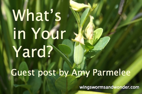 Discover the wonders in your own backyard with this guest post by Amy Parmelee! Click through for ideas and free printables!