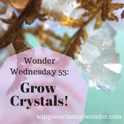 We've grown a lot of things here at Wings, Worms, and Wonder so let's grow crystals! Click to get your Wonder Wednesday Crystal growing activity!