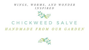 Spring means chickweed is about to burst! Join Wings, Worms, and Wonder and make a Wonder Wednesday chickweed solar salve with printable label!