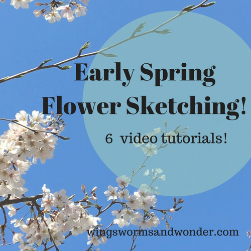 Happy second day of spring! Celebrate with early spring flower drawing videos! Click to get all 6 Wings, Worms, and Wonder sketching tutorial videos compiled in today's post!!