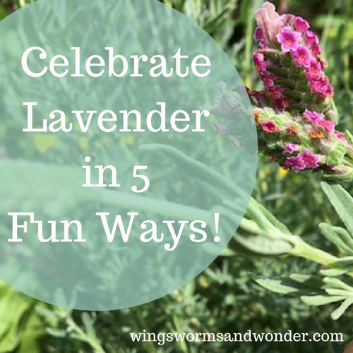 Is lavender inspiring your creative connections? Click to check out 5 ways to bring the joys of lavender to everyday life with Wings, Worms, and Wonder!
