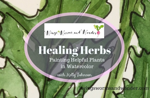 Paint 3 healing herbs in watercolor with this Free Wings, Worms, and Wonder nature journaling class!