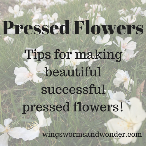 This post is the first in a 3 week series on pressed flowers from how-to, to ideas on what to do with the flowers you press! Click for practical tips to get started pressing flowers with Wings, Worms, and Wonder!