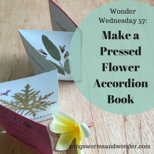 It's Wonder Wednesday 57! Click to make an accordion style pressed flower book!