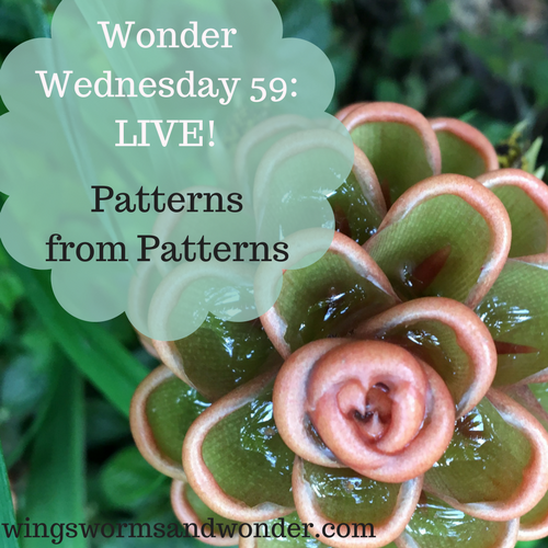 Join me live again this month for more creative nature connection inspiration! Click to join us in painting patterns from patterns!