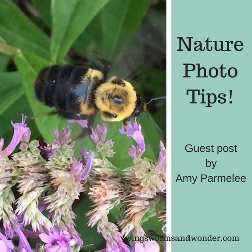 Get some great tips for improving your nature photo taking skills! Click for Wings, Worms, and Wonder creative nature connection fun!