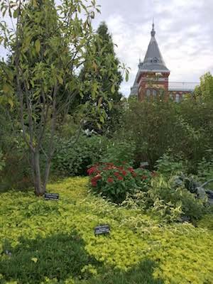 dc_garden