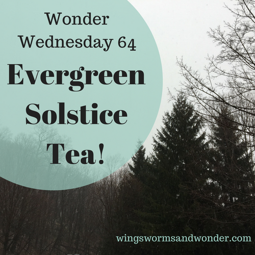 This Wonder Wednesday 64 activity completes the Winter Solstice Adventure series! Click to head out into the trees to brew your own evergreen solstice tea!