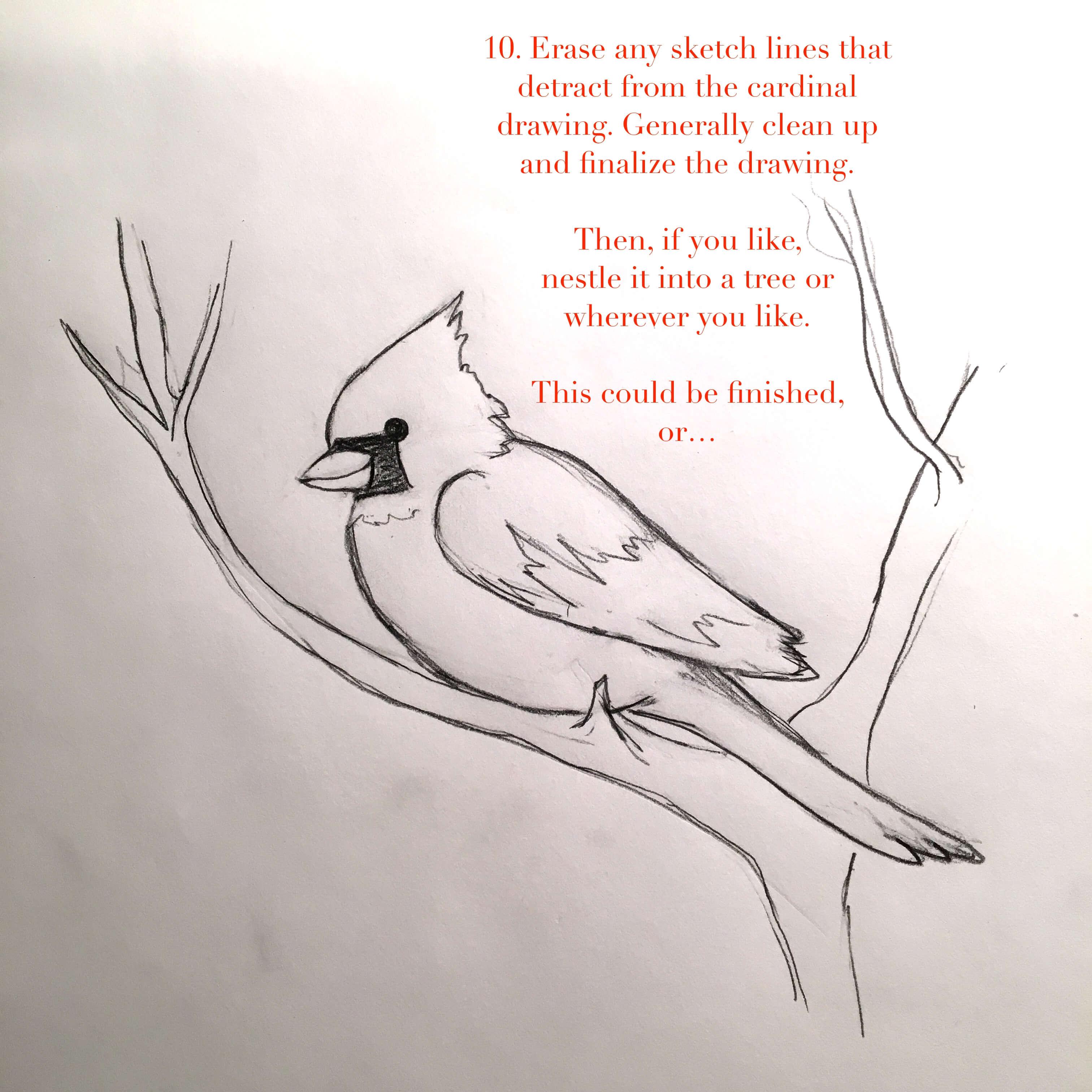 cardinal-10