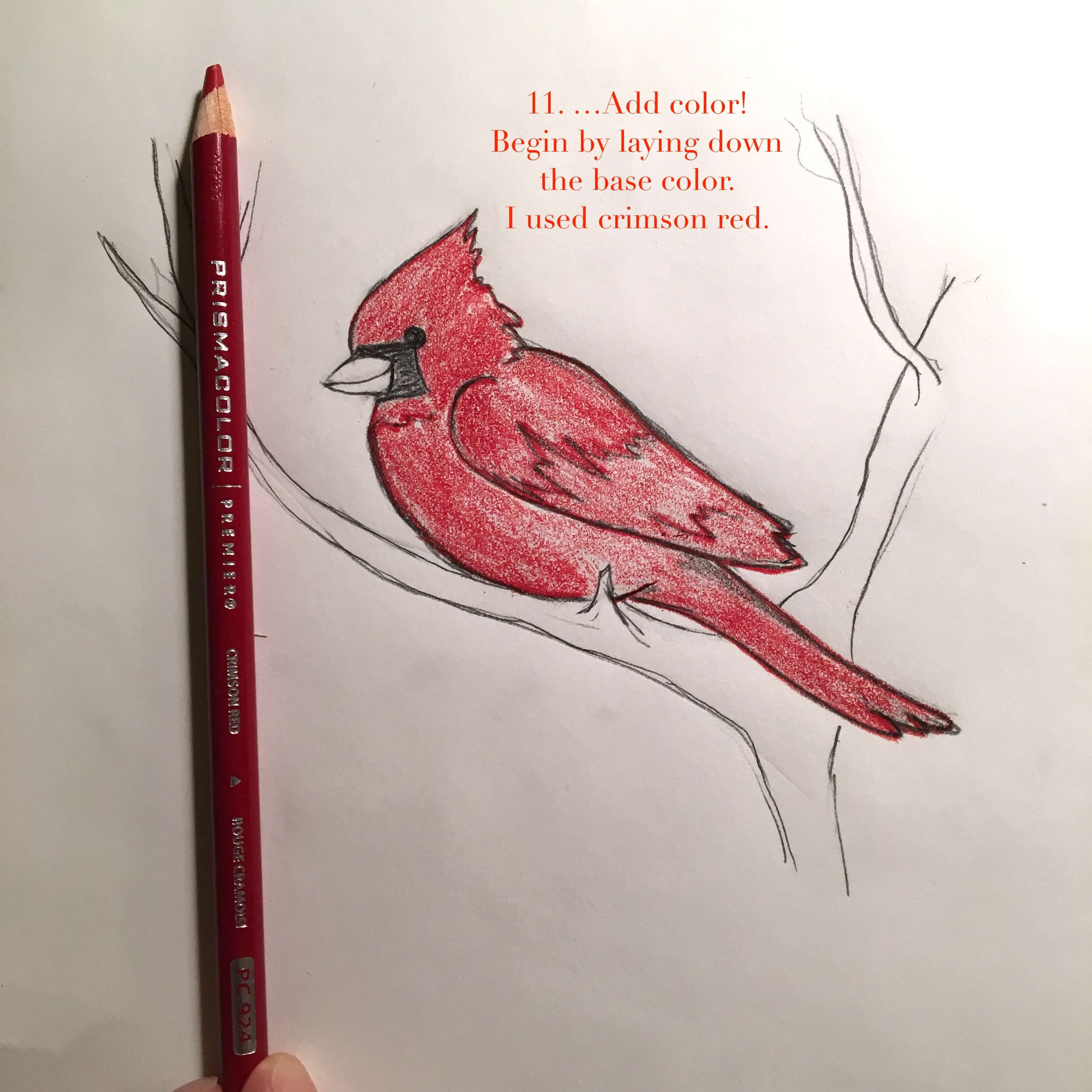 cardinal-11