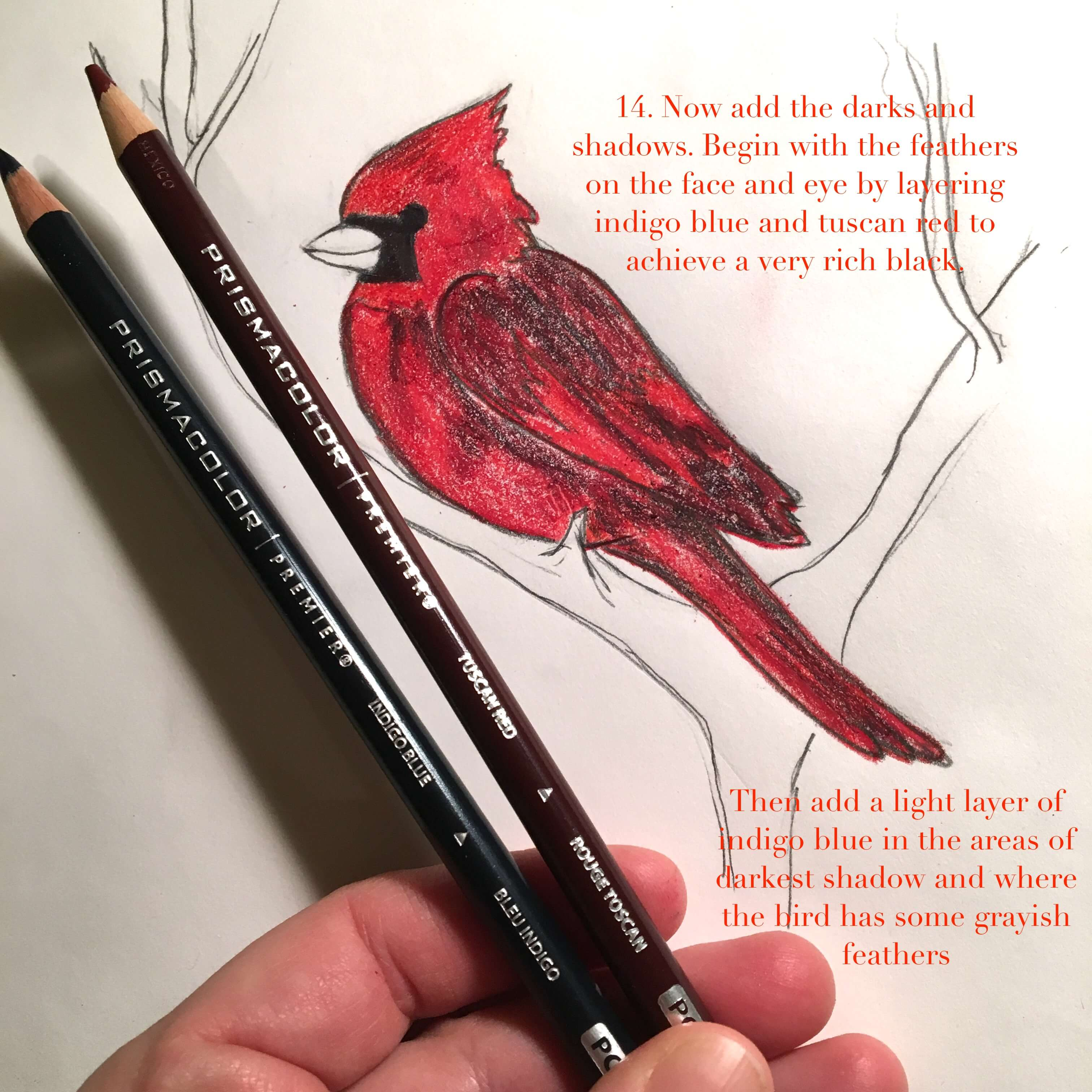2b2ffd9556e Wonder Wednesday 65  Draw Cute Winter Cardinals step by step - Wings ...