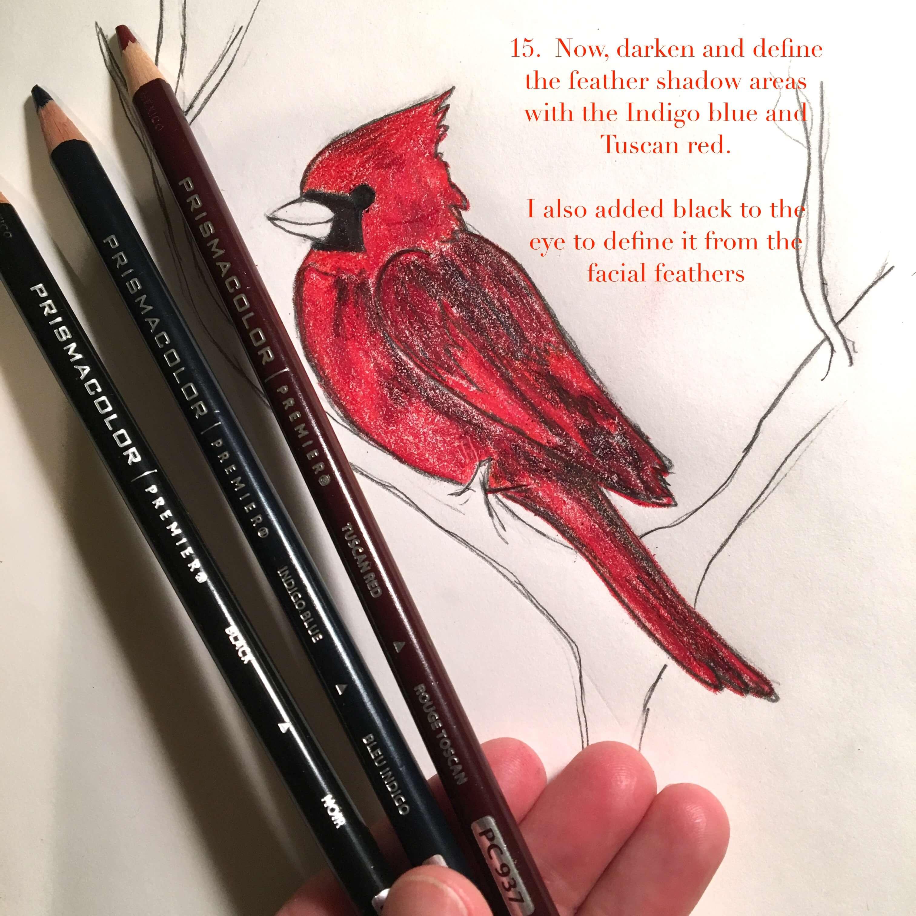 cardinal-15
