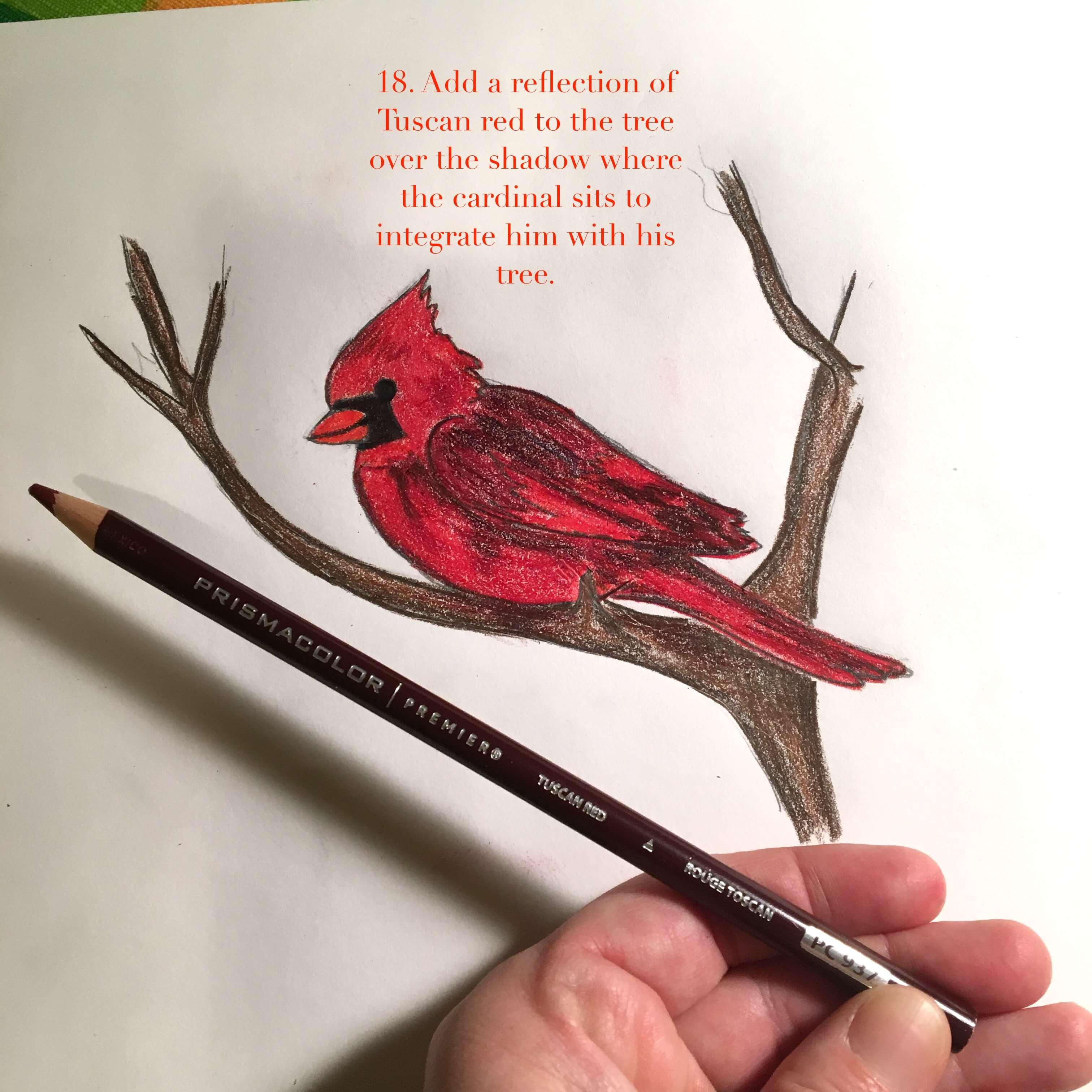 cardinal-18