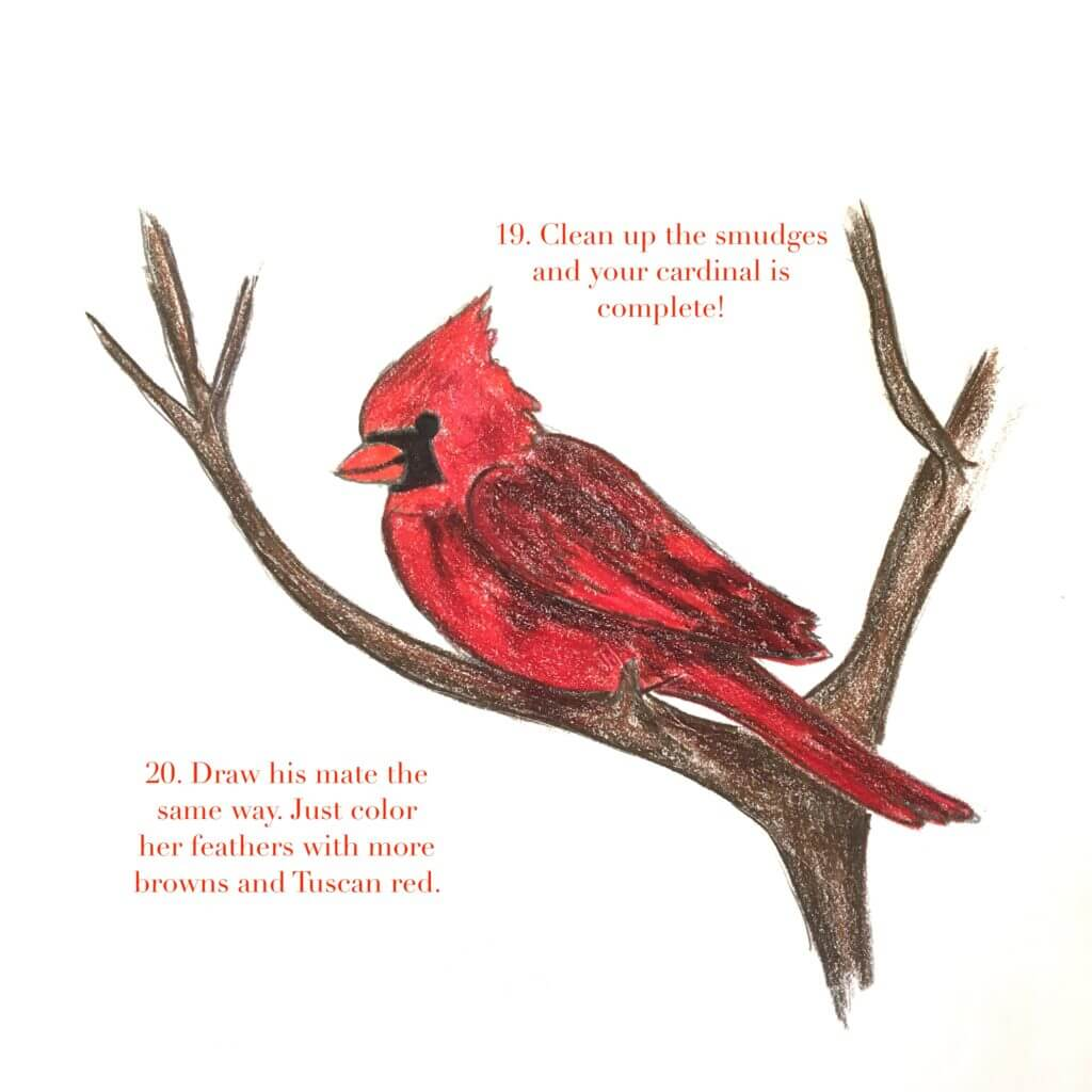 Drawing Lesson: How to Draw a Cardinal - YouTube  |Cardinal Bird Drawings