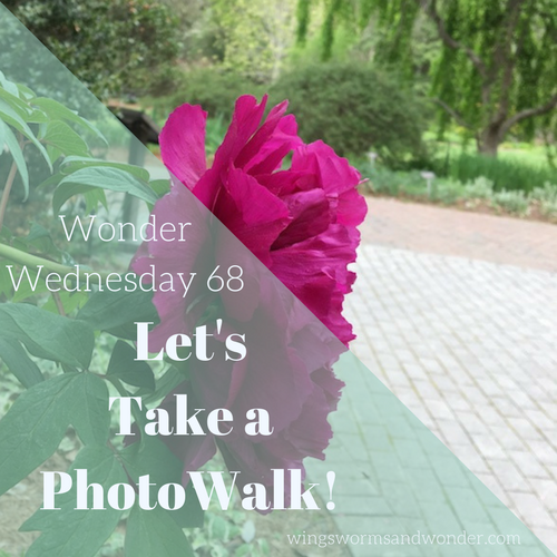 Photo walks are fun ways to encourage friends and family who prefer an ipad to a lily pad to start creatively connecting with nature! Click to learn how!