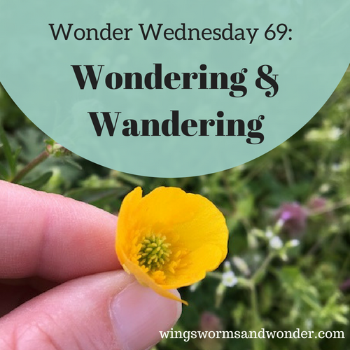 To celebrate the upcoming release of Wonder and Wander, this Wonder Wednesday's activity is a sneak peak version of one of the activities in the book!