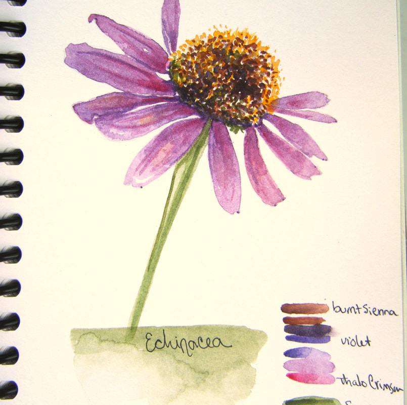 bb-kelly-echinacea-journal-crop_orig