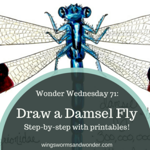 It's Wonder Wednesday 71! Click to learn how to step by step draw a damsel fly the Wings, Worms, and Wonder way!
