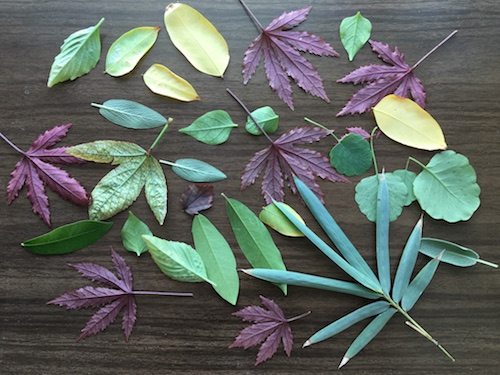 Play with seasonal leaves and paint resist techniques in this Wonder Wednesday 74 Leafy Resist nature art activity!