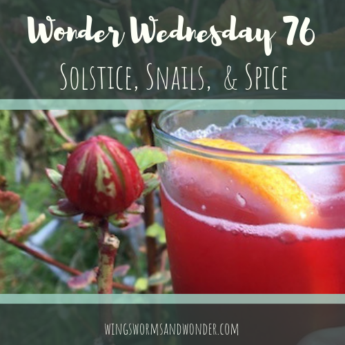 Click for Wonder Wednesday ideas for getting cozy and making your own Spiced Solstice drink - right from the tropics to warm you up!
