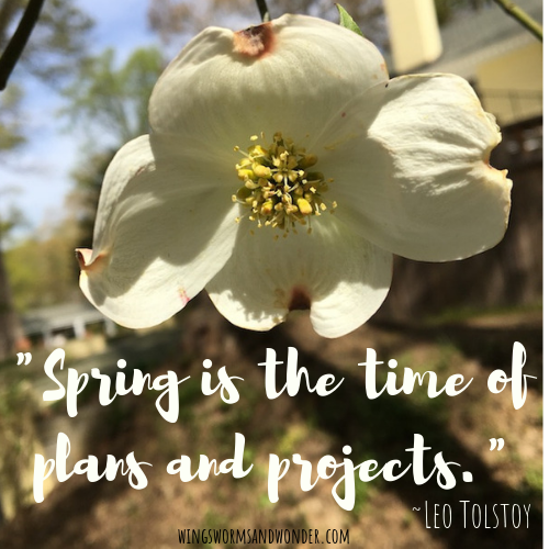 Make time to enjoy the equinox transition! Click for Wings, Worms, and Wonder ideas to spark wonder in the seasonal transition!
