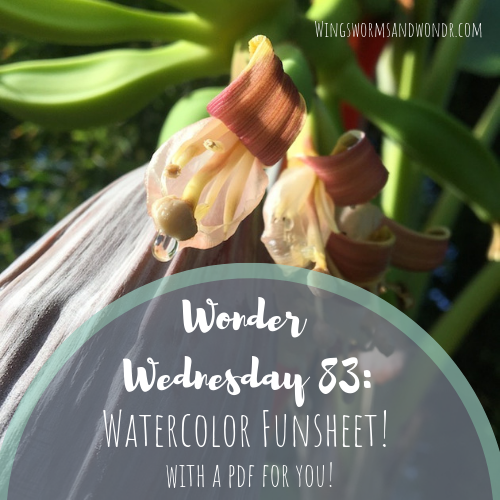 It's World Watercolor Month! Click for a Wings, Worms, and Wonder printable watercolor funsheet for you to celebrate summer nature.